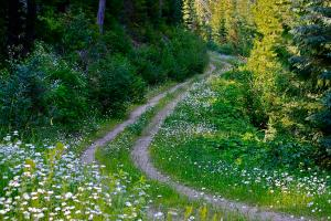 life-is-a-journey-on-a-road-lined-with-daisies-karon-devega