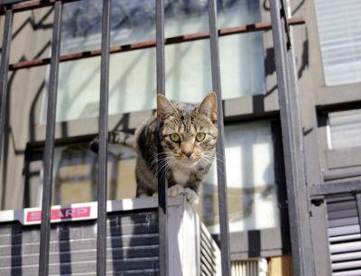city-york-photo-new-cat-cc