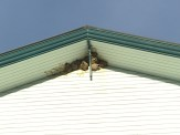Swallow nests all over. This is on the pool building