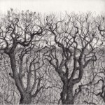 Prints Hedgerow Border Boundary Etching