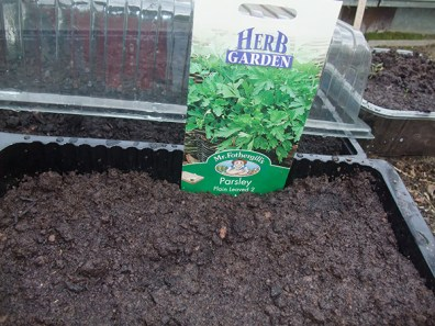 Parsley sown