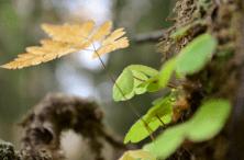 Fotosafari_firkløver