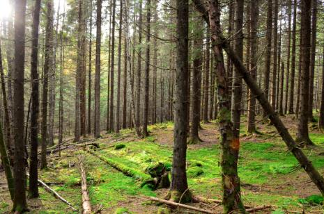 Fotosafari_skog