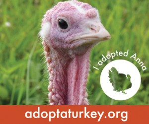 2014-Adopted-Turkeys-472x394-Anna