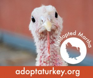2014-Adopted-Turkeys-472x394-Martha
