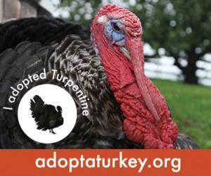 2014-Adopted-Turkeys-472x394-Turpentine