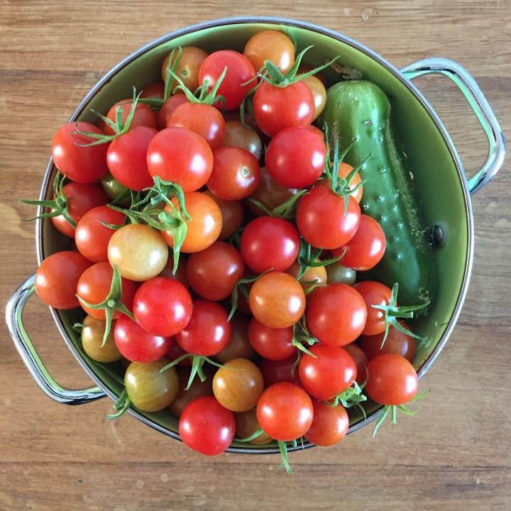tomate cuke.jpg
