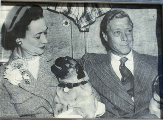 The Duchess and Duke of Windsor with one of their beloved pugs.