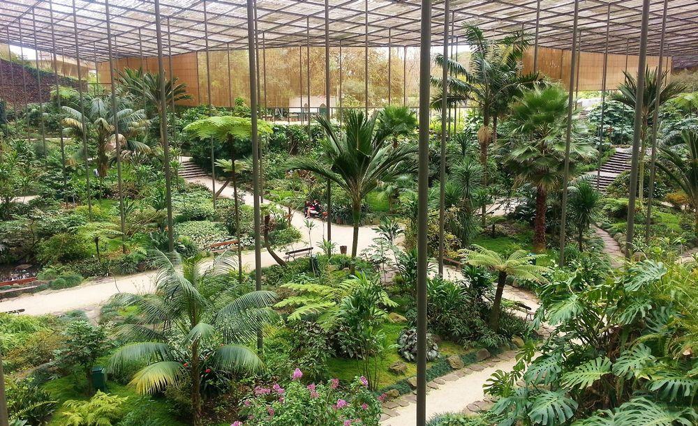 Estufa fria un jardin tropical au centre de lisbonne - Estufa de jardin ...