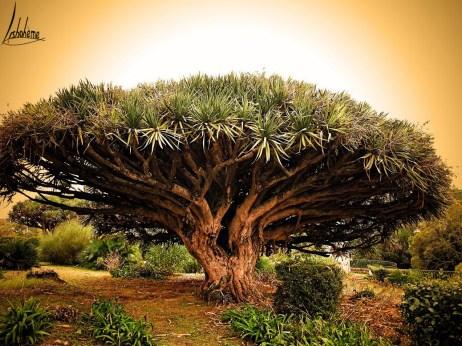 tn_arbre
