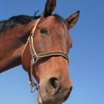 Over het paard getild