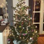 De perfecte kerstboom