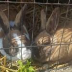 Gastblog van de konijnen knabbel en babbel Lisette Schrijft
