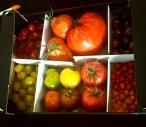 tomaten proeven verschillende soorten tomatoworld Lisette Schrijft