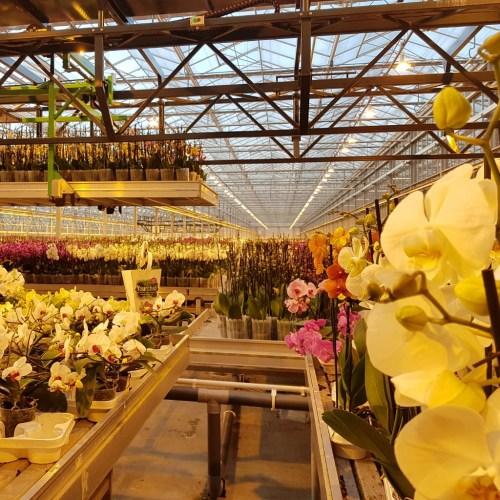 orchideeen kwekerij Lisette Schrijft