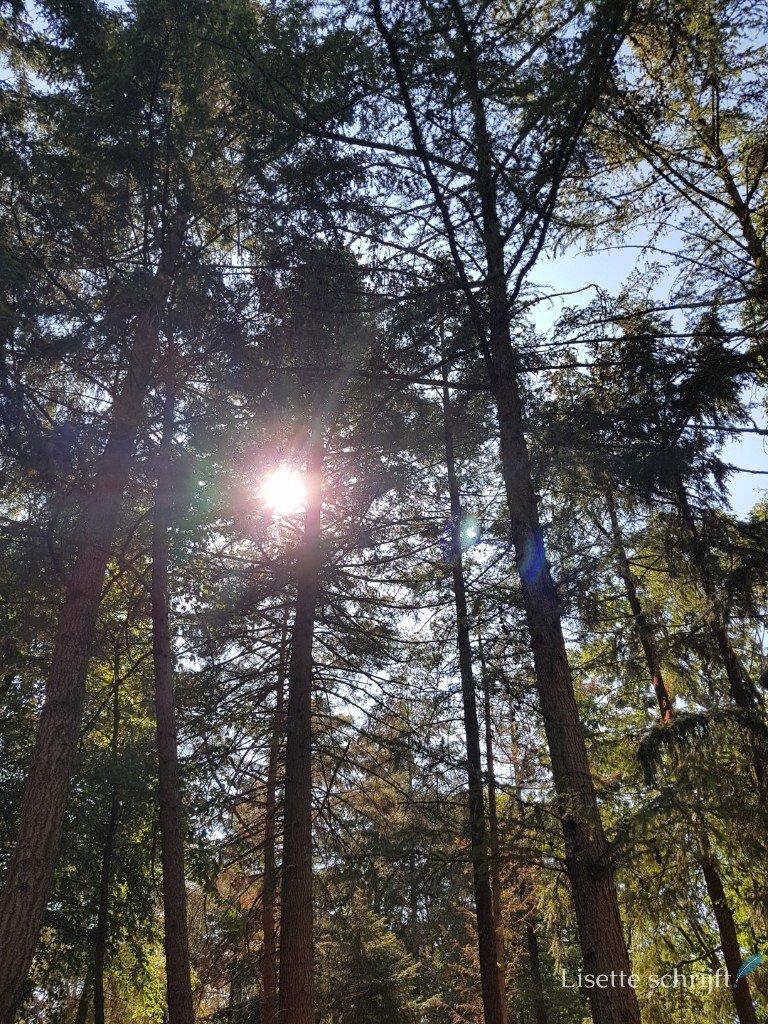 de zon schijnt door de bomen in het bos van de kempervennen