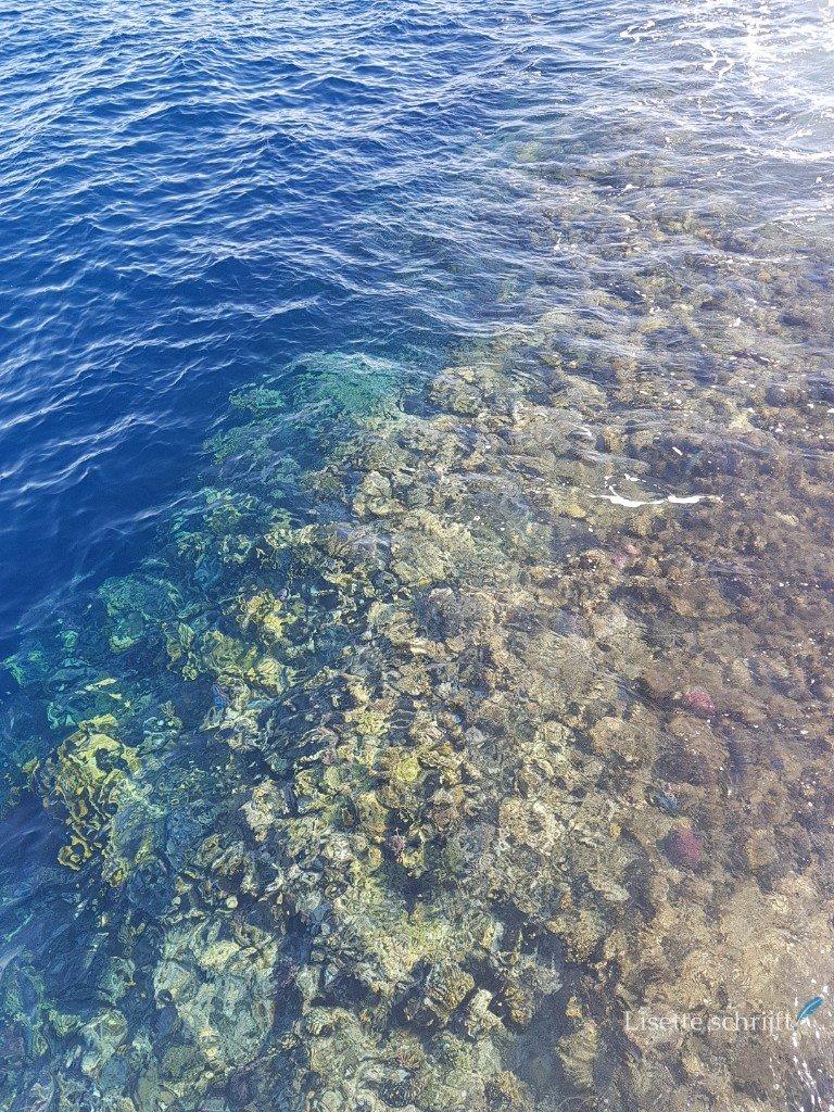 het koraalrif bij marsa alam egypte
