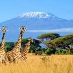 Op safari naar Kenia Lisette Schrijft