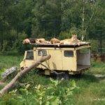 De Beekse Bergen: safari voor beginners