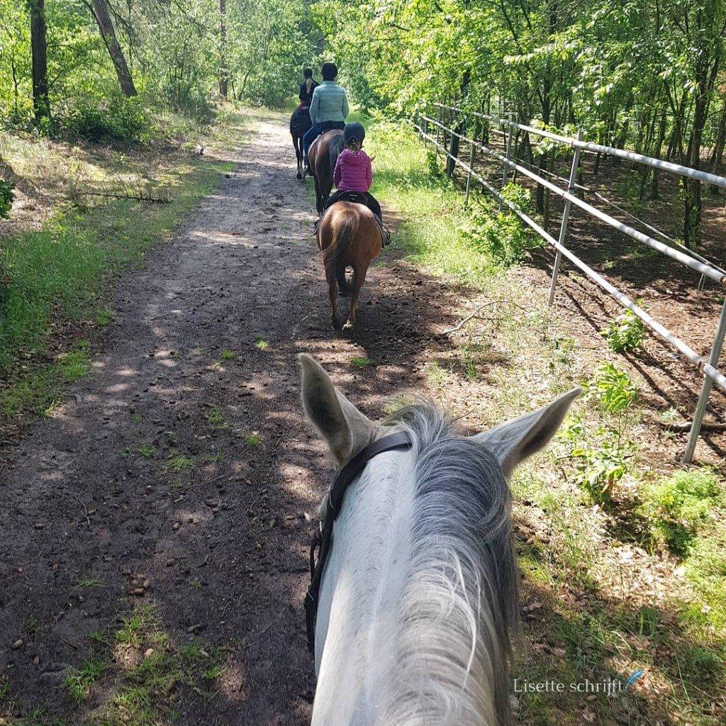 Een bosrit te paard
