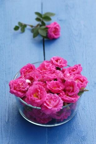 Roser er ikke bare til pynt. Foto: Lise von Krogh.