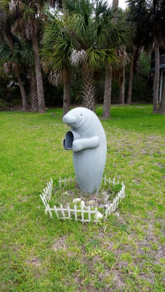 Every year this manatee mailbox makes me laugh.