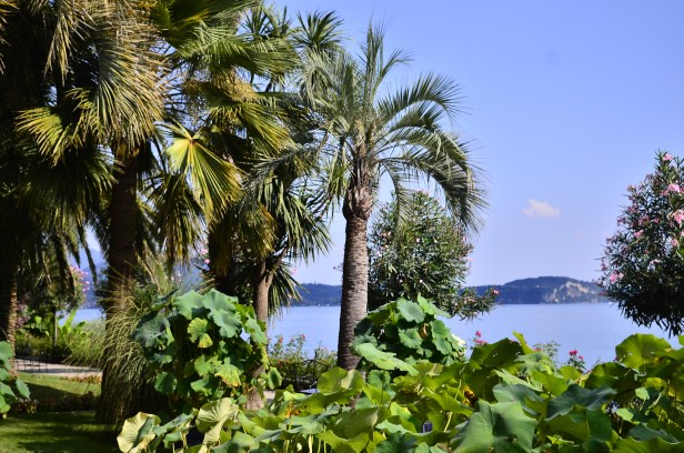 scorci tropicali
