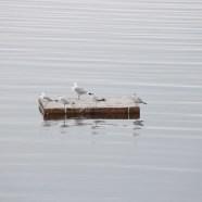 Constant Seagulls: A Sketch (2016)