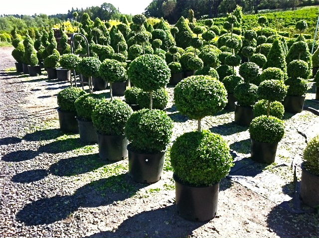 Globes, globes and more globes ready for your garden