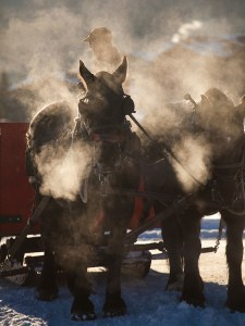 Wyoming wedding and horse sleigh