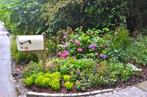 The mail box is being crowded out by pink hydrangea—wonderful