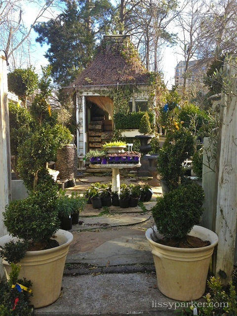 Boxwoods garden shed