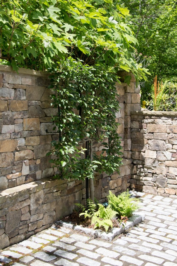 Espailly pear trees line the stone wall
