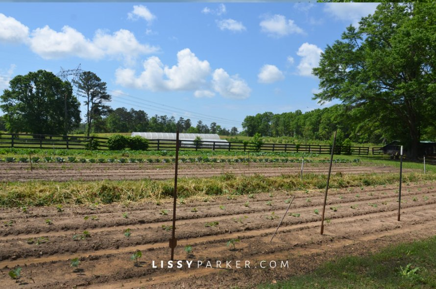 The vegetables filled every acre of the property