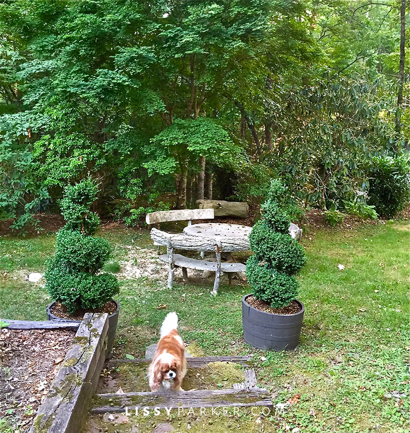 puppies, and hydrangeas and boxwood