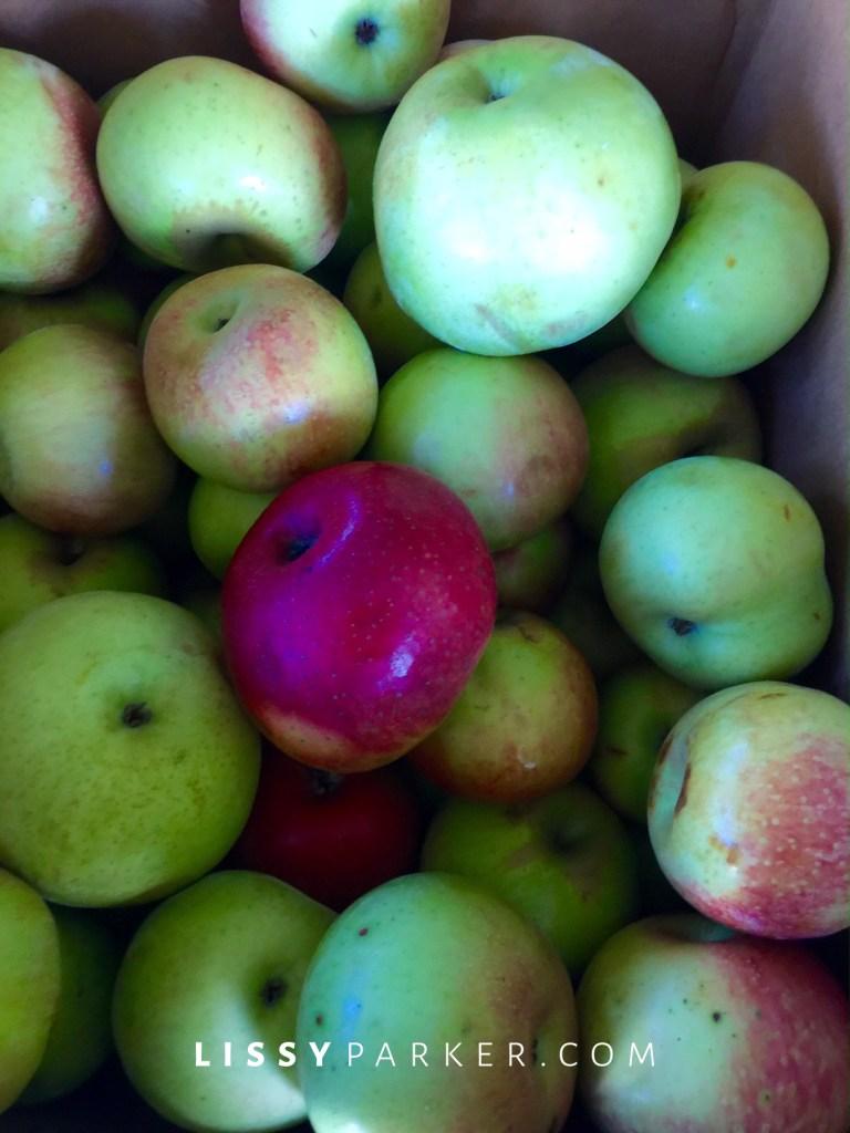 Hoover heritage apples