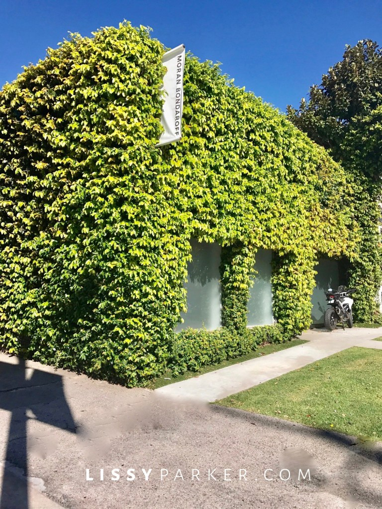 ivy covered buildings