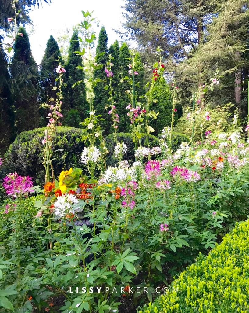 boxwood edged flower beds