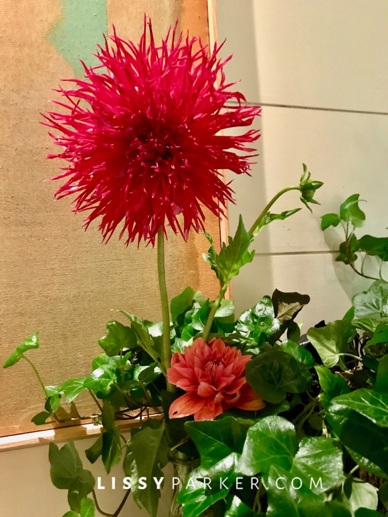 Friday flowers-dahlias