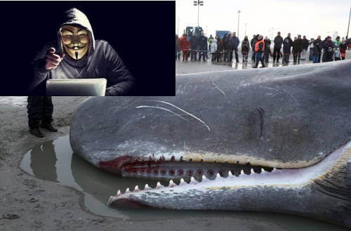 Iceland Kills Whales and Anonymous Hackers Bring Down Iceland Government Website