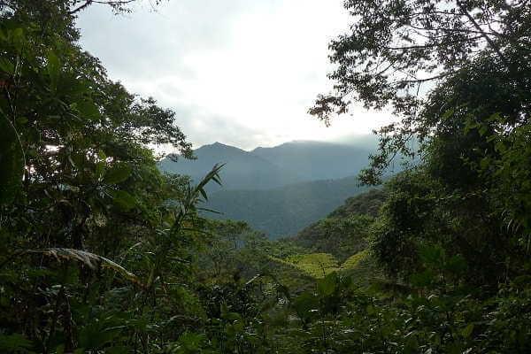 Tandayapa Cloud Forest