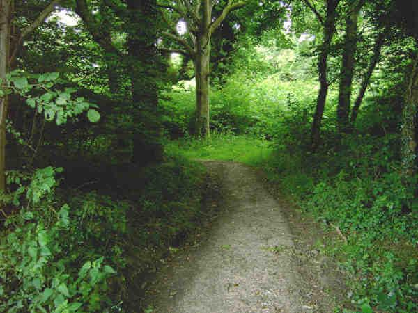 Clapham Woods