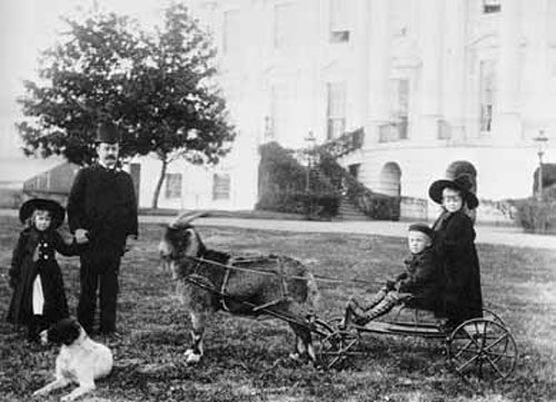 Presidential dogs: Benjamin Harrison and Dash