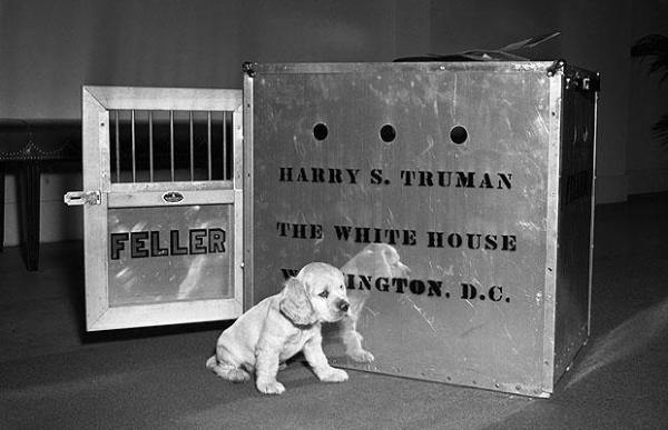 Presidential dogs: Harry S. Truman Feller