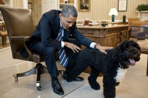 20 Presidential Dogs Of United States Presidents