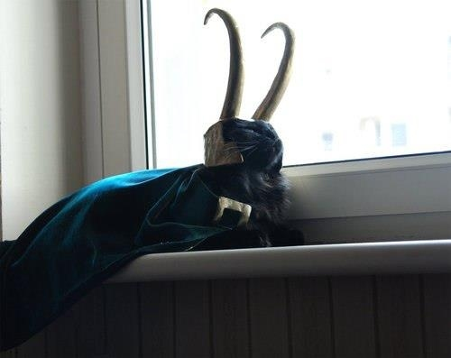 Cats dressed like superheroes