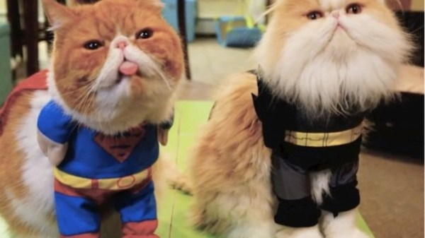 20 Adorable cats Dressed As Superheroes