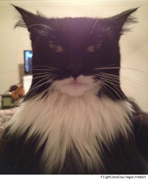 20 Adorable Cats Dressed as Superheroes: Batman