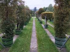 Estufa - Schonbrunn