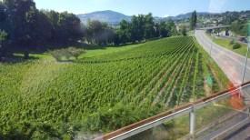 Vista do trem panorâmico - Golden Line